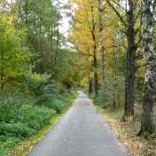 Weg tief mit Birken
