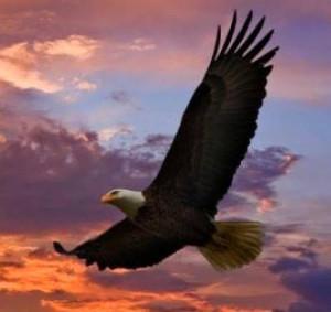 Adler fliegt