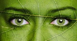 Augen grün Blatt